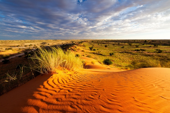 Kalahari Northern Cape desert