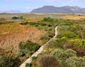 Rondevlei Wetlands Nature Reserve, Cape Town, South Africa